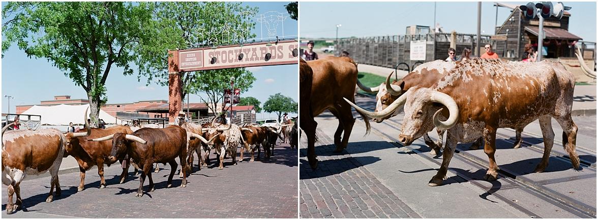 Colorado Rodeo